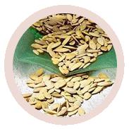 Передпосівна обробка насіння Вермісолом